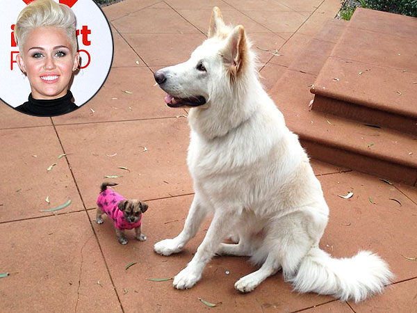 Miley Cyrus Shares Photo of Dogs Mate, Penny Lane