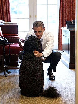 President Barack Obama with Dog Bo at White House: Photo