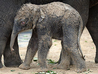 The Daily Treat: Newborn Elephant Will Turn Your Bad Day Right Around