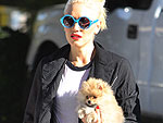 See Latest Gwen Stefani Photos
