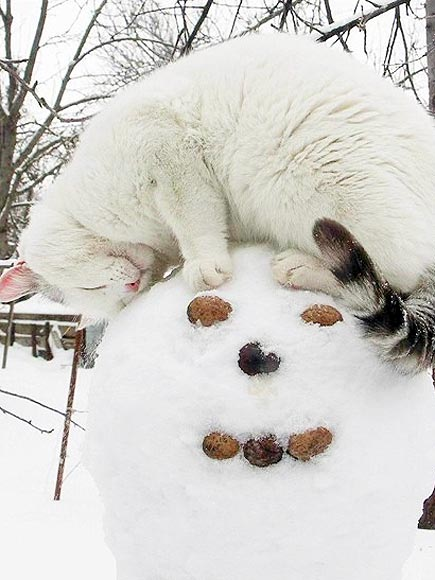 PHOTOS: Cats in the Snow Will Melt Your Cold, Cold Heart