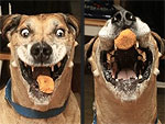 PHOTOS: A Love Story About a Dog and His Chicken Nugget