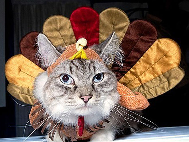 4 Cats Who Could Care Less About Thanksgiving