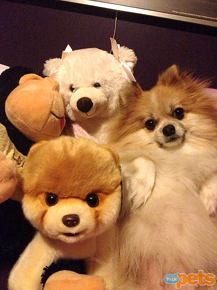 The Cutest Pets on Twitter!