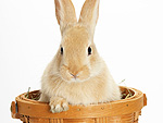 PHOTOS: Easter Bunnies in Baskets