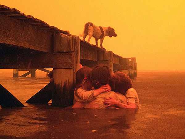 PHOTO: Dog Overlooks Water Amid Australian Wildfires