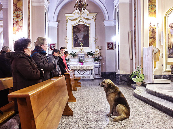 Dog Attends Mass at Church Where Owner's Funeral Was Held