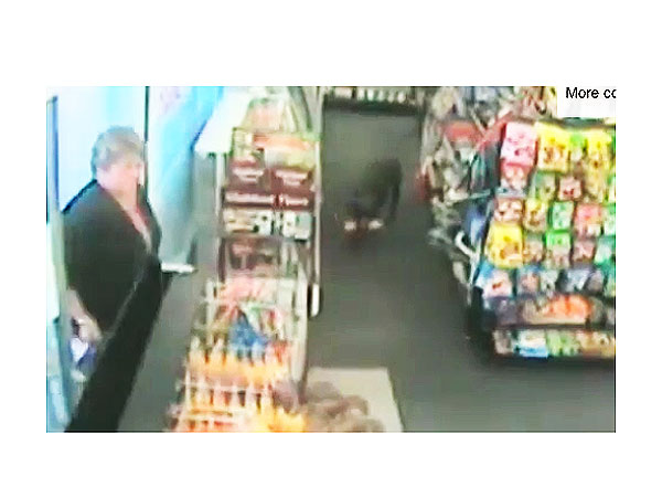 Three-Legged Dog Robs Grocery Store in New Zealand