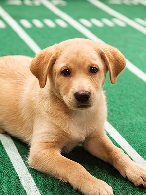 Puppy Bowl's Starting Lineup Revealed