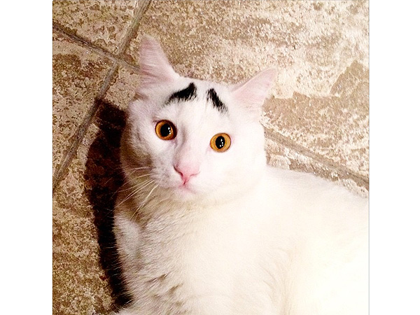 Cat with Eyebrows Is Internet Sensation: Photo