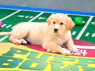 5 Most Paw-Dorable Moments from the Puppy Bowl