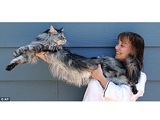 The Water Bowl: World&#39;s Longest Cat Dies From Cancer at Age 8