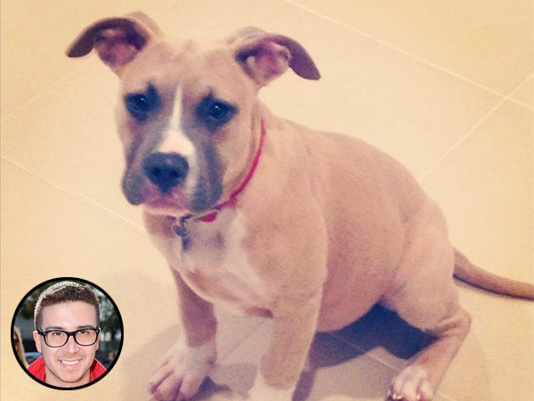 Vinny Guadagnino Adopts Pit Bull from North Shore Animal League