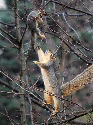 Squirrel Rescues Baby: Photo