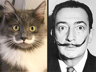 The Daily Treat: This Mustached Cat Resembles Salvador Dalí