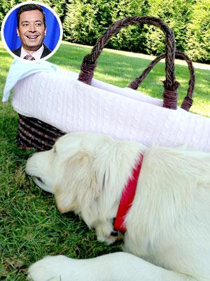 Jimmy Fallon Baby, Dog Jealousy