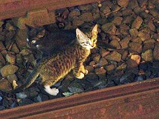 Two Kittens Rescued from Brooklyn Subway After Stopping Service