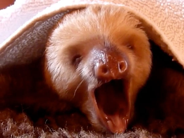 The Daily Treat: Sloth Hits a High Note with Whitney Houston's 'I Will Always Love You'
