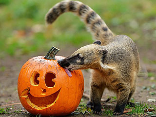 The Daily Treat: Here Are Four Furry Friends Celebrating Howl-oween with Pumpkins