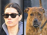Stars and Their Pets: Jessica Biel&#39;s Doggy Duo | Jessica Biel