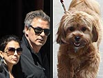 Stars and Their Pets: Alec & Hilaria Baldwin's Sidewalk Strutters | Alec Baldwin, Hilaria Thomas