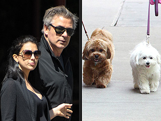 Stars and Their Pets: Alec & Hilaria Baldwin&#39;s Sidewalk Strutters | Alec Baldwin, Hilaria Thomas