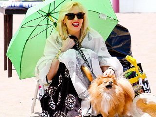 Stars and Their Pets: Gwen Stefani's Beach Bum
