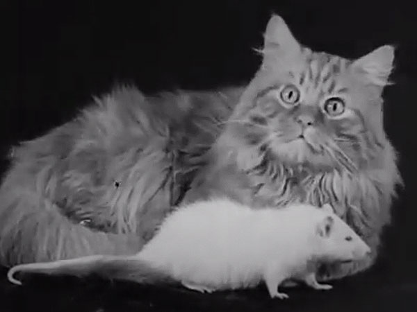 Fluff on Film: 7 Adorable Examples of Cat Videos Before the Internet