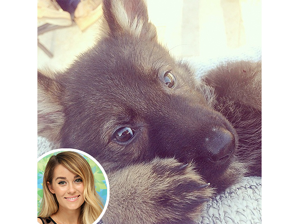 Lauren Conrad Adopts New Dog: Instagram Photo
