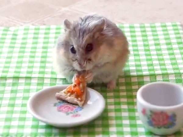 Watch Hamster Eat the Tiniest Pizza Slice Ever