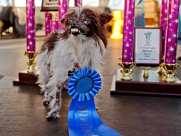 World's Ugliest Dog 2014: Photo