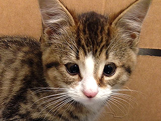 Homeless Kitten Born Without Eyelids Will Have Full Vision Thanks to Giving Doctor