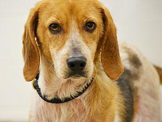 Adopt Me! Help Hazel Complete Her Transformation