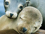 PHOTOS: Let's Talk About Seals, Baby