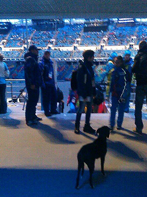 Winter Olympics 2014: Stray Dog Watches Opening Ceremony in Sochi