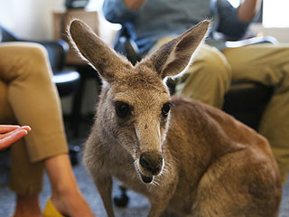 The Daily Treat: Watch What Happens When a Kangaroo Holds Court at the PEOPLE Offices
