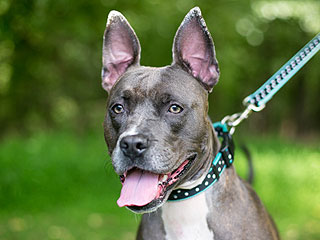 Adopt Me! Sophia Wants to Be Your Superstar Dog