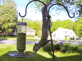Let's Marvel at This Squirrel Stealing Food from a Bird Feeder