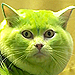 Watch: Brave Groomer Turns Cat Into a Green Dragon