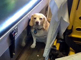 The Daily Treat: Rancher's Dog Hops on Moving Ambulance to Stay Close to His Owner