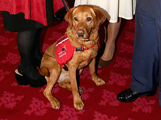 Daisy the Cancer Detection Dog Awarded for Sniffing Out 550 Cases, Saving Owner's Life