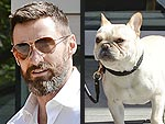 Stars and Their Pets | Hugh Jackman