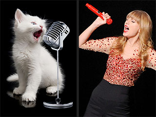In Which We Use Cats to Explain Taylor Swift Songs | Taylor Swift