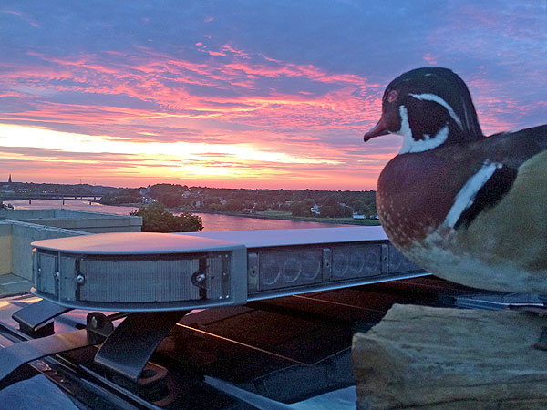 Maine Police Department Adds Stuffed Duck to Facebook Photos