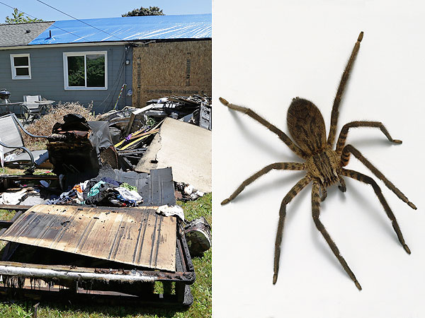 Man Uses Blowtorch to Kill Spider Sets House on Fire
