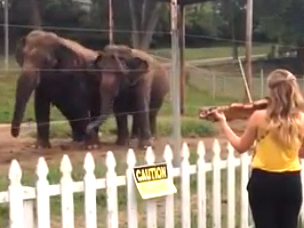 WATCH: Two Elephants Dance Along to a Violin Concerto