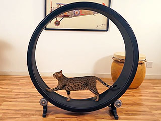 Me-Wow! Kickstarter for Kitty Hamster Wheel Far Exceeds Goal with Nearly $100,000 Funded