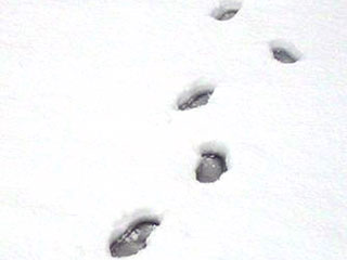 Snowy Footprints Lead New York Police Straight to a Burglar