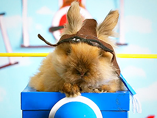 Funny Video: Fuzzy Bunny Fighter Pilot Battles for Cuteness