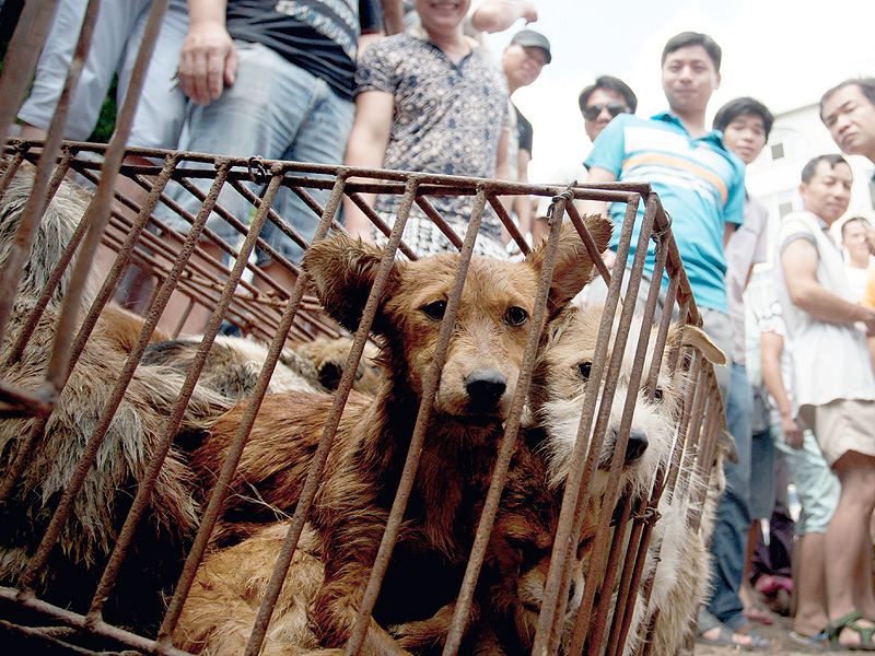 Ricky Gervais and Celebrities Slam Animal Cruelty in Yulin China Festival